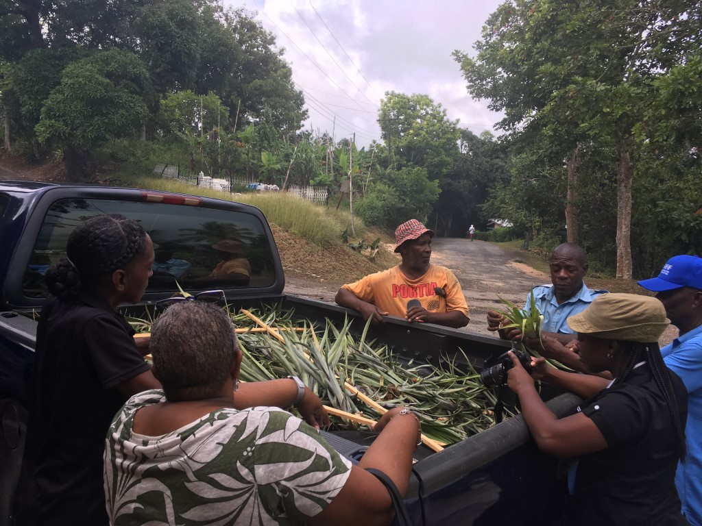 Clarendon farmers diversifying crop production to be more climate-resilient